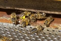 gelbe_und_orange_pollen-1024x680